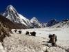 nepal2_800