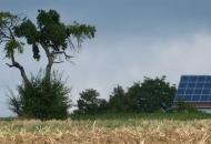 Baum-09-09
